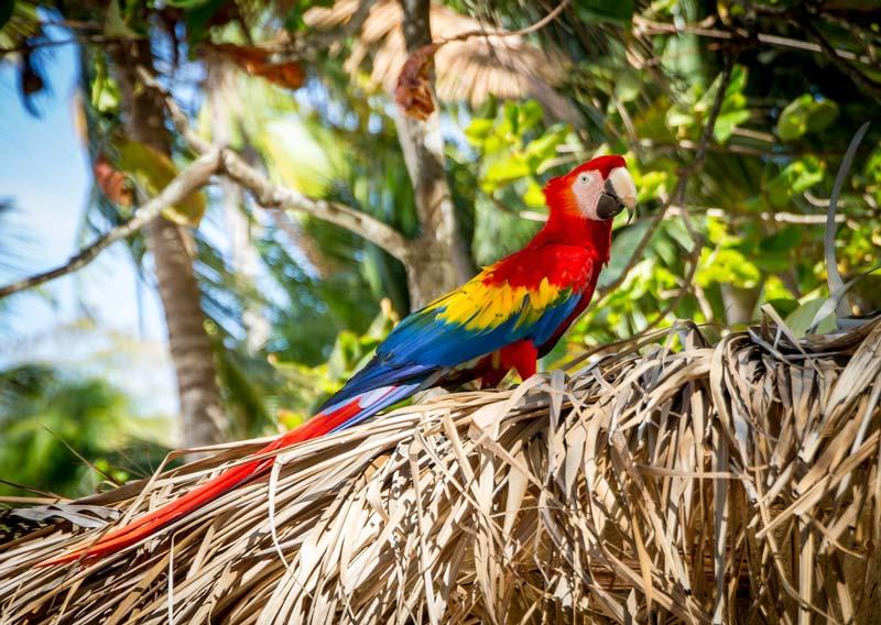 Fauna Costa Rica