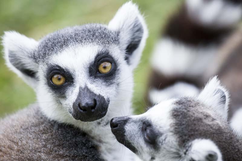Fauna de Madagascar