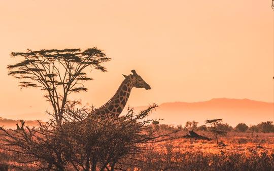 viaje de novios a africa