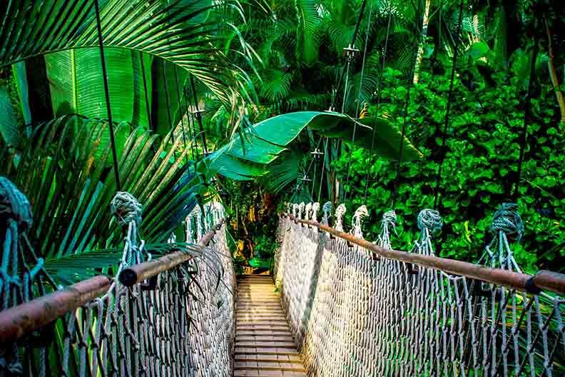 Jungla de Costa Rica