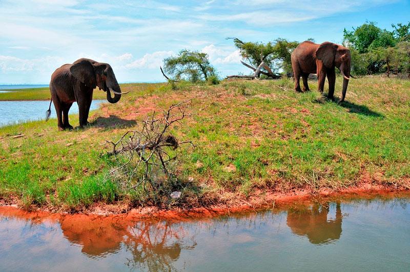 elefantes zimbabwe