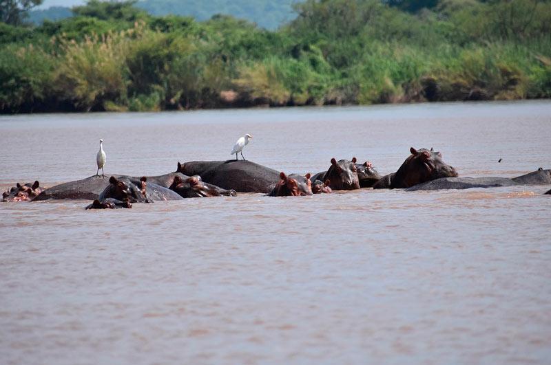 hipopotamos zimbabwe