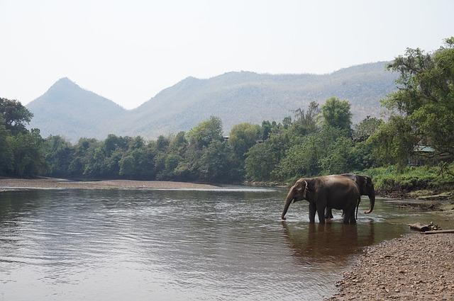 Phuket Elefant Sanctuary